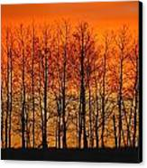 Silhouette Of Trees Against Sunset Canvas Print