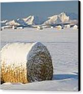 Snow-covered Hay Bales Okotoks Canvas Print