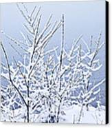 Snowy Trees Canvas Print by Elena Elisseeva