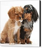 Spaniel & Dachshund Puppies Canvas Print by Mark Taylor