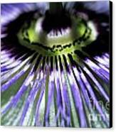 Stamen Of A Passionflower Canvas Print