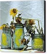 Sunflowers .helianthus Annuus Canvas Print