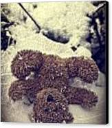 Teddy In Snow Canvas Print by Joana Kruse