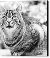 Tomcat Canvas Print by Frank Tschakert