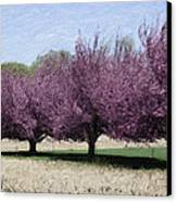 Trees On Warwick Canvas Print by Trish Tritz