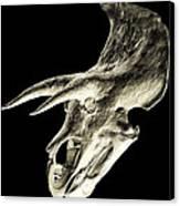 Triceratops Dinosaur Skull Canvas Print