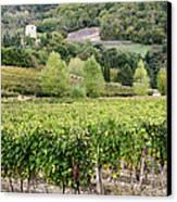 Vineyard Canvas Print by Jeremy Woodhouse
