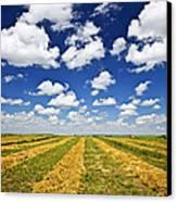 Wheat Farm Field At Harvest In Saskatchewan Canvas Print by Elena Elisseeva