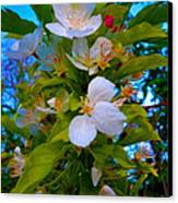 White Beauty Canvas Print by Sergio Aguayo