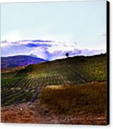Wine Vineyard In Sicily Canvas Print