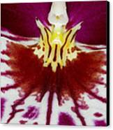 Exotic Orchid Flowers Of C Ribet Canvas Print by C Ribet