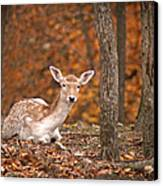1111-7638 Fawn In Fall Canvas Print