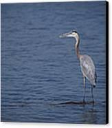 1206-9280 Great Blue Heron 1 Canvas Print