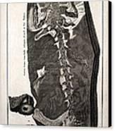 1726 Scheuchzer Homo Diluvii Testis Canvas Print