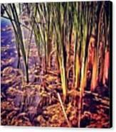 Instagram Photo Canvas Print by Pete Michaud
