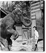 Bill Snyder, Elephant Trainer Canvas Print by Everett