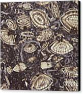 Foraminiferous Limestone Lm Canvas Print by M. I. Walker