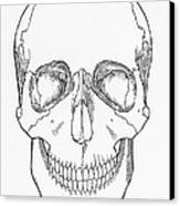 Illustration Of Anterior Skull Canvas Print