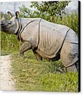 Indian Rhinoceros Canvas Print by Tony Camacho