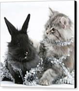 Kitten And Rabbit Getting Into Tinsel Canvas Print by Mark Taylor