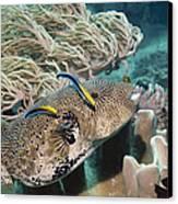 Map Pufferfish Canvas Print by Georgette Douwma