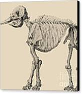 Mastodon Skeleton Canvas Print by Science Source