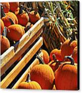 Pumpkins Canvas Print by Elena Elisseeva
