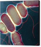 Salmonella, Tem Canvas Print by Henrik Chart, Centre For Infectionshealth Protection Agency