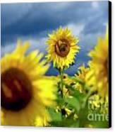 Sunflowers Canvas Print by Bernard Jaubert