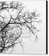 Tree Against A White Sky In The Early Morning Hours Canvas Print by Gal Ashkenazi