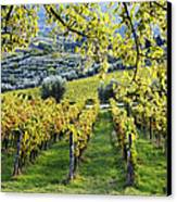 Vineyards And Olive Groves Canvas Print