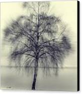 Winter Tree Canvas Print by Joana Kruse