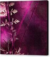 Wonderment Canvas Print by Bonnie Bruno