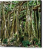 20120915-dsc09882 Canvas Print
