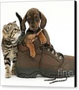 Kitten And Puppy Canvas Print by Jane Burton