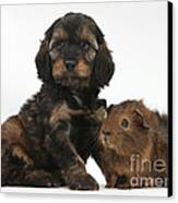 Puppy And Guinea Pig Canvas Print