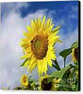 Close Up Of Sunflower Canvas Print