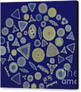 Diatom Arrangement Canvas Print by M. I. Walker