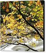 Fall Along Williams River Canvas Print by Thomas R Fletcher