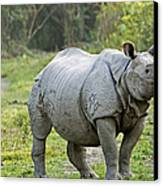 Indian Rhinoceros Canvas Print by Tony Camacho