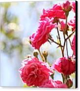 Roses Canvas Print by Gal Ashkenazi