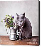 Russian Blue Canvas Print by Nailia Schwarz
