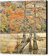 Cypress Trees In The Mist Canvas Print by Iris Greenwell