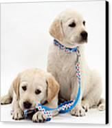 Goldidor Retriever Puppies Canvas Print by Jane Burton