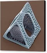 Diatom, Sem Canvas Print