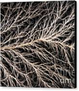 Electrical Discharge Lichtenberg Figure Canvas Print by Ted Kinsman