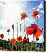 Field Of Poppies. Canvas Print