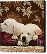 Goldidor Retriever Puppies Canvas Print