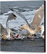 Seagulls Canvas Print by Debra  Miller
