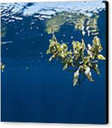 Tropical Seaweed Canvas Print